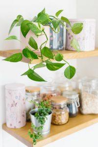 dekorativno cvijeće i začini u maloj kuhinji