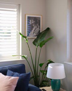 Sobna biljka u uglu sobe, pored plavog kauča. Venecijaneri i zelena lampa u prvom planu.